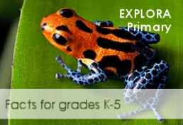 Colorful tree frog representing Explora database for grades K - 5